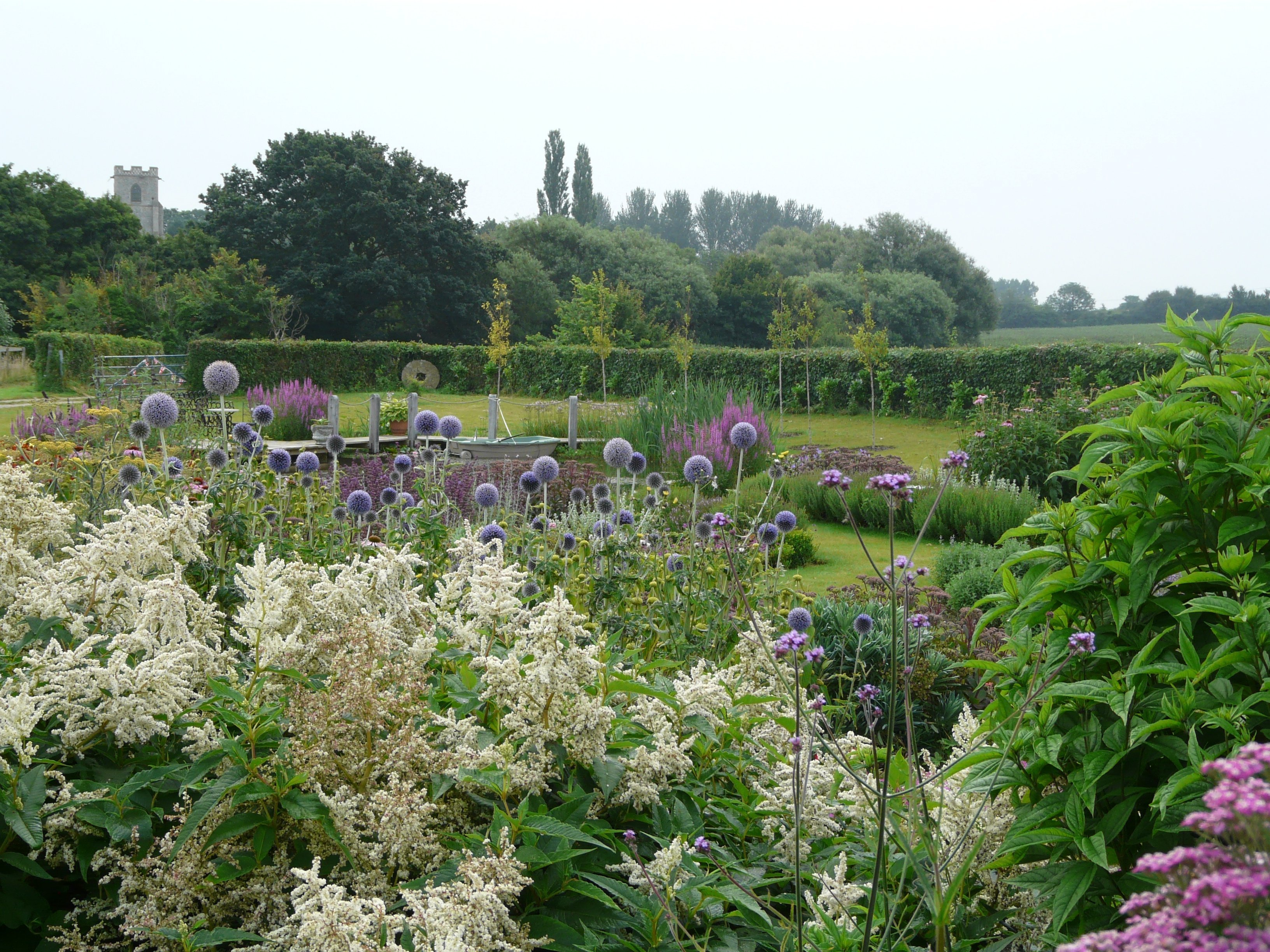 Echinops and Persicaria by Helen Allison Garden Designer, Suffolk